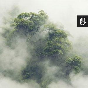 las tropikalny w mgle w japonii samotne drzewo