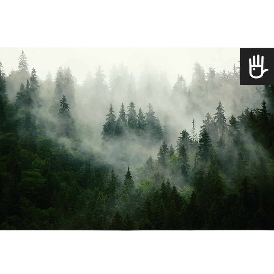 las we mgle zamglone drzewa