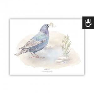 plakat szpak z serii plakaty polne ptaki