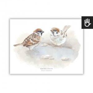 plakat wróbel z serii plakaty polne ptaki