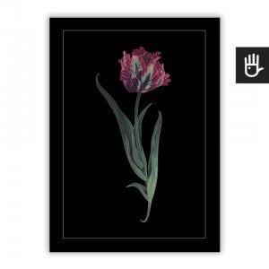 Plakat Tulipan Papuzi na czarnym tle