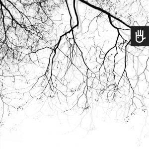 podgląd na wzór fototapety Gałęzie na wietrze z motywem las we mgle