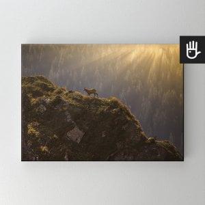 Obraz na płótnie Kozice górskie