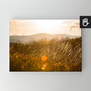 Obraz na płótnie Słońce w trawie