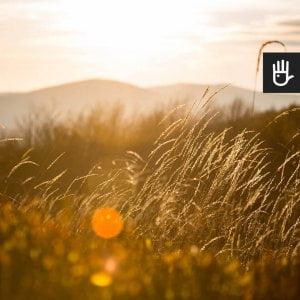 Kadr fototapety Słońce w trawie