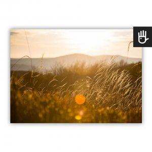 Plakat Słońce w trawie z widokiem złotej trawy na tle gór w słońcu