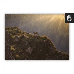Plakat Kozice górskie ze zwierzętami na tle górskiego krajobrazu