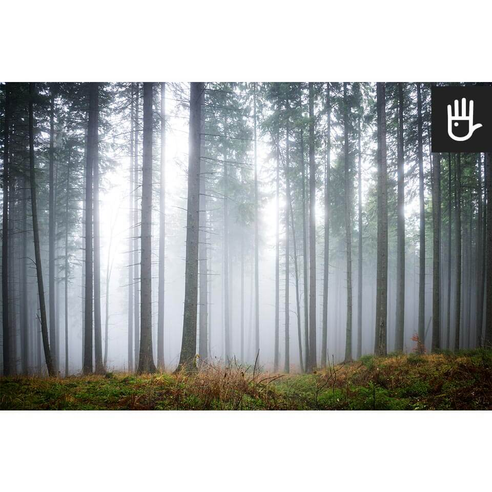 Fototapeta tajemniczy mglisty las w odcieniach zimnej szarości