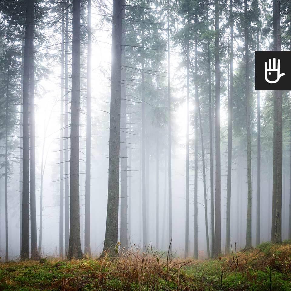 Kadr fototapety Tajemniczy mglisty las z pięknym lasem we mgle