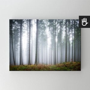 Obraz na płótnie tajemniczy mglisty las