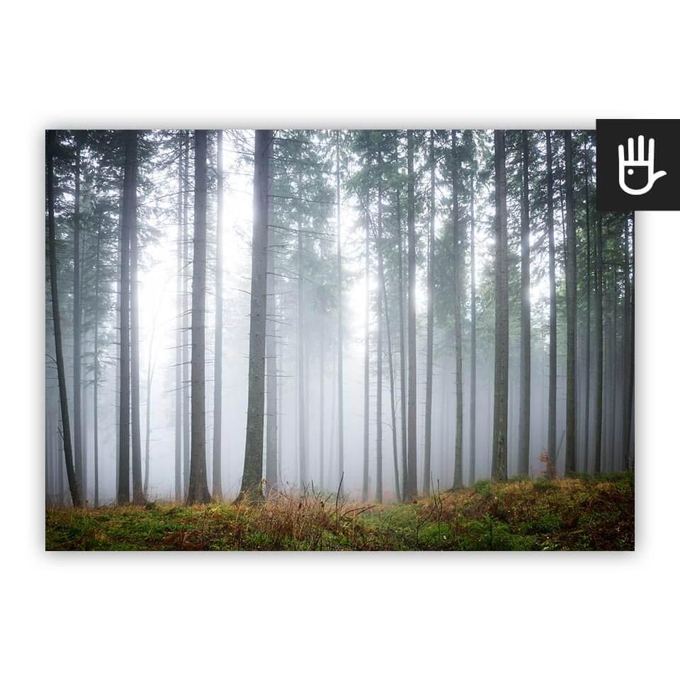 Plakat Tajemniczy mglisty las