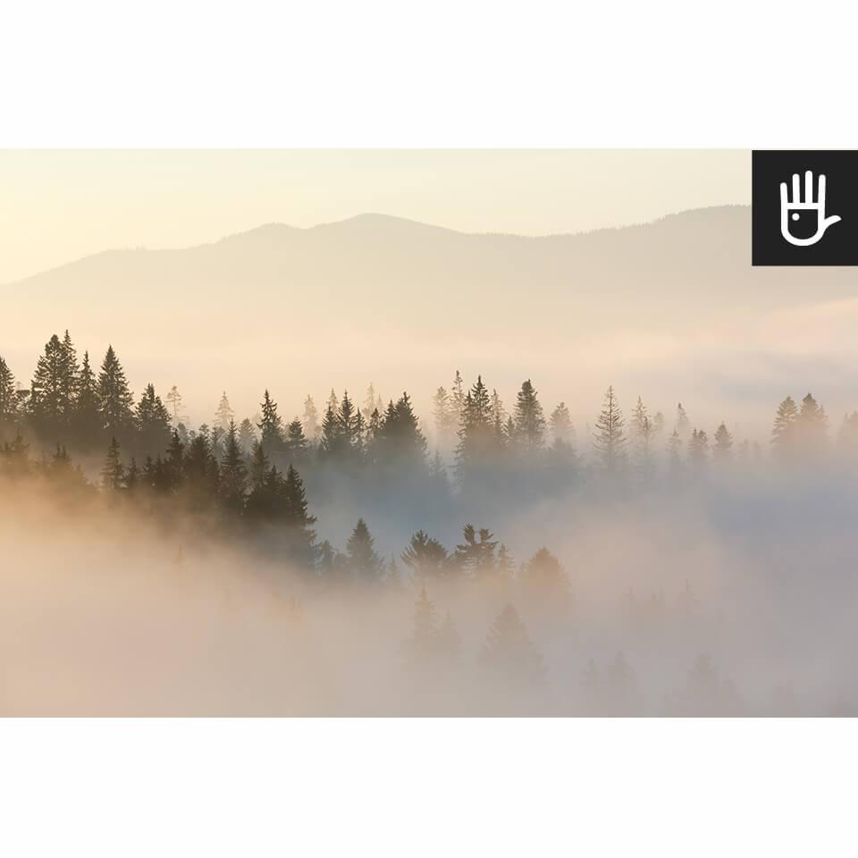 Widok na całą fototapetę z lasem o wschodzie słońca