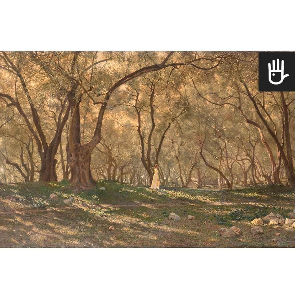 Widok fototapety Pod oliwnymi drzewami w ciepłej tonacji